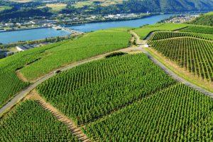 Vineyards along Rhône River